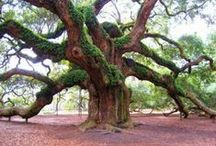 awesome trees / by Bonnie Johnson