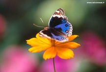 Wind Beneath My Wings! / Song by Bette Midler / by Gail Weeks