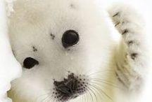 Please save them....