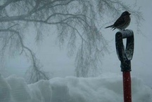 Why I love winter!
