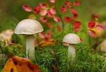 Moss and Fungi
