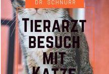 Dr. Schnurr - Blog / Alles für den Katzenhalter