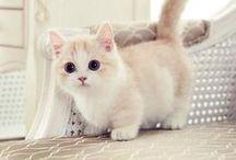 Katzen / Katzen, Katzen, Katzen. Süße Bilder, hilfreiche DIY Tipps und noch mehr...alles ist willkommen