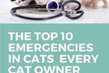 Die Katze muss zum Tierarzt - Was ist da los?