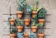 Garden Time / by Abby Joy