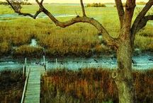 lowcountry love / by Monica Eustace