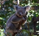 Australia - Gold Coast places to go & things to do / Theme parks, whale watching, fun houses and so much more!
