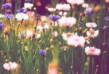 •Floral•