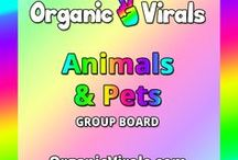 Animals & Pets Group Board / Everything to do with Animals & Pets! If you'd like to contribute to this board then follow us at pinterest.com/organicvirals and then go to organicvirals.com to fill out our Contact Us form with your details and you'll get added within 24 hours guaranteed! Max 5 pins per day and please repin 1 post for every pin that you add.  Feel free to invite your friends or anyone else you think would like to contribute!