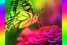 Home & Garden / Articles from OrganicVirals.com regarding Home & Garden