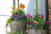 - Gardens Decorations and Inspirations