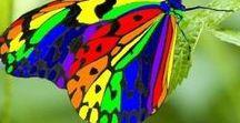 - Animals - Butterflies & Moth / Motyle, ćmy