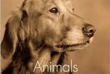 Animal Obsession Disorder / animals