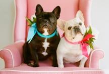 Little friends / by Ludivine Terrier