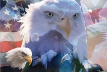 GOD BLeSS The USA / Patriot / by Shannon Hill