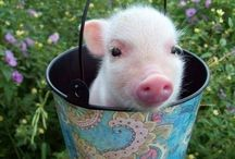Cute / Cuteness, usually of the animal variety