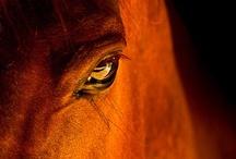 Horses!!!!! / by Meagan Cihak