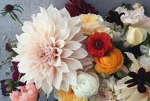 Flowers, Plants and Gardening / by Design*Sponge