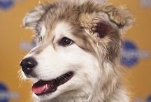 Puppy Bowl IX / by Yahoo! TV