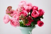 Blumen und Pflanzen /Flowers and Plants / Wunderschöne Blumenpracht Blumen und Pflanzen . Pflege, Zucht und Arrangements.