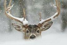 Winter / by Victoria Parker