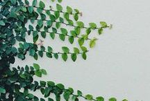 inspiring - Climbing | Falling Plants