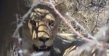 Wildlife & Safaris / Découvrez des idées d'aventures wildlife, safaris et vie sauvage.