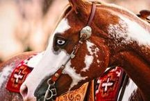 Beautiful Horses / Znajdziecie tu najpiękniejsze fotografie koni, natury oraz takie zdjęcia, które inspirowały mnie i zachęcały do tworzenia...