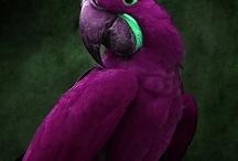 Colour:  Purple!  / Grape, lavender, lilac, violet, plum...