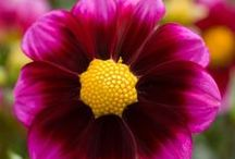 Beautiful Flowers. / by Tiffany Stahl