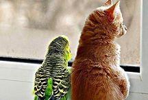Animal friends  / by Sarah Sherrington