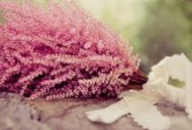 astilbe / inspo for wedding decor with astibe