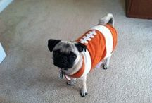 Pets Make The World A Better & Funnier Place / A Pug In A Football Costume Is Called A Pugskin