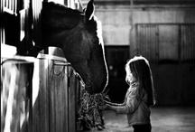 Horses / by Bianca Buschor