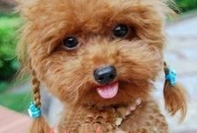 All About Adorable! / Dogs, Cats, Puppies, Kittens, Babes and MORE! / by LightInTheBox