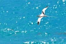 Bermuda: Wonderous Wildlife