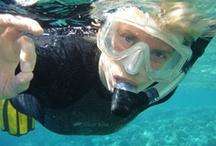 Bermuda: Dive Right In