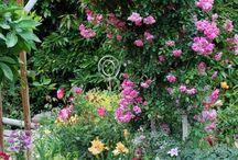 Gardening / by Heidi Carter