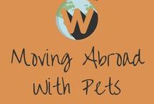 Moving Abroad With Pets / Advice for travelings moving abroad with their pets