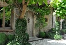 Gardens / Plants / Back Yards / Flowers / by Jill Roney