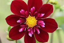 Flores | Flower