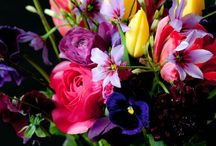 Flowers / by Leona Eunice Gentry