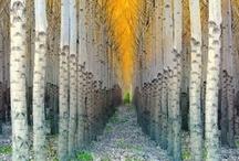 Passageways / by Joni Peterson