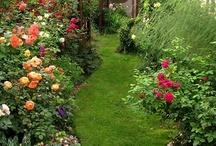 Backyard Dreams