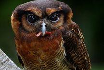 Owls / by Leona Eunice Gentry