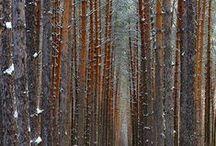 trees                 ∆ / Trees, fall, autumn, nature photography