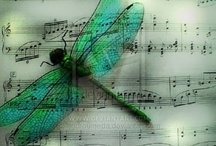 Dragonflies / by Michelle Cater