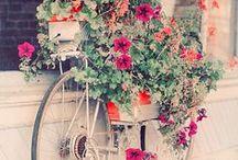 Garden Décoration / by Ombeline Brun