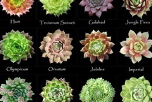 Succulents / by Stephanie Parker