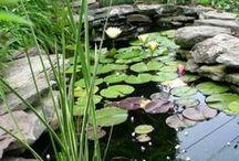 pond / by Hollie Kouns